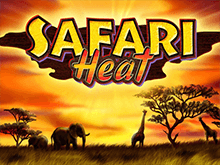 Онлайн игра Safari Heat