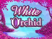 Онлайн игра White Orchid